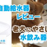 犬用自動給水器サムネ