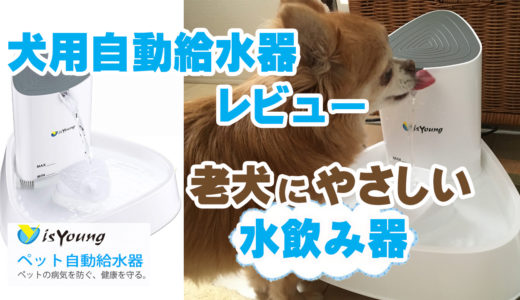 【isYoung ペット自動給水器レビュー】老犬にやさしい水飲み器