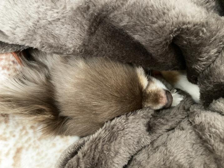 mofuaモフア毛布で寝るもえ