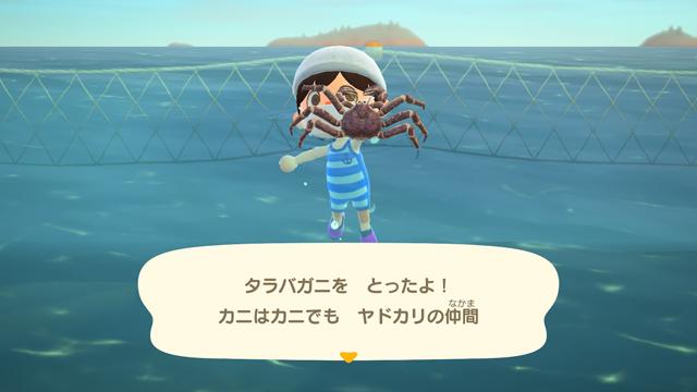 【あつ森】海の幸を1時間乱獲してみた!(2月北半球) タラバガニゲット!