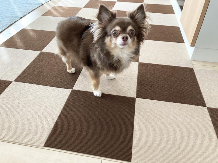 【BITTOP】老犬にやさしいペット用カーペット レビュー 使い心地は最高