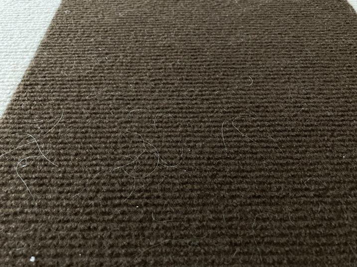 【BITTOP】老犬にやさしいペット用カーペット レビュー 抜け毛のお掃除