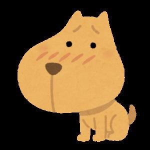 【BITTOP】老犬にやさしいペット用カーペット レビュー おしっこ漏れちゃった